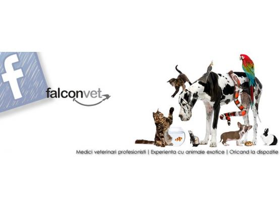 FalconVet - Cabinet veterinar sector 2, Bucuresti